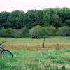Pasture, cows, apple orchard, woods beyond.
