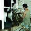 Jonathan milking a cow